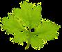 De Groene Dagobert
